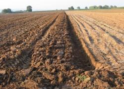 Piaţa terenurilor agricole din Republica Moldova în stand by