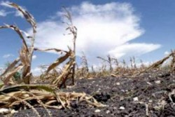 Asigurările şi riscurile în agricultură – opinii ale experţilor